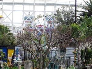 The Luna Park ferris wheel and fun rides make a novel backdrop for a community garden