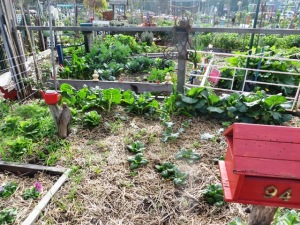 Good mulching and good composting are visible everywhere in the garden