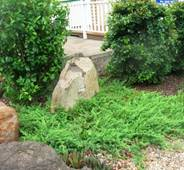 A rock, a few pebbles and a no-maintenance groundcover fill an awkward corner