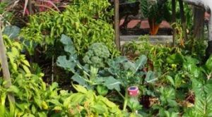 Mixed plantings of vegetables in beds works best with permaculture
