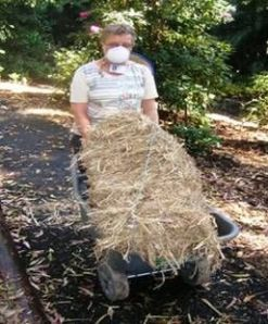 Nothing improves soil like mulching with crop residues such as cane straw - but remember always to wear a mask because it's dusty stuff and can cause allergies