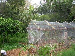 Netting is the best protection against birds, insects and other pests