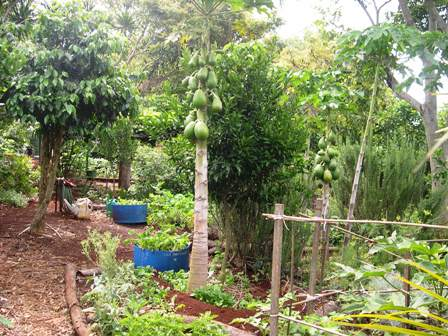 Permaculture in a hot climate | gardenezi on modern garden design, veggie garden design, herb garden design, landscape design, companion planting garden design, high tunnel garden design, vegetable garden design, horticultural therapy garden design, water garden design, simple house garden design, forest garden design, bioretention garden design, swale garden design, bioshelter design, livestock garden design, xeriscape garden design, home garden design, keyhole garden design, cutting flowers garden design, sustainable garden design,