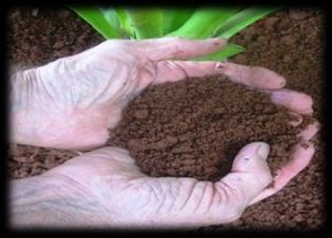 Good soil is the foundation of successful permaculture - it should look something like this